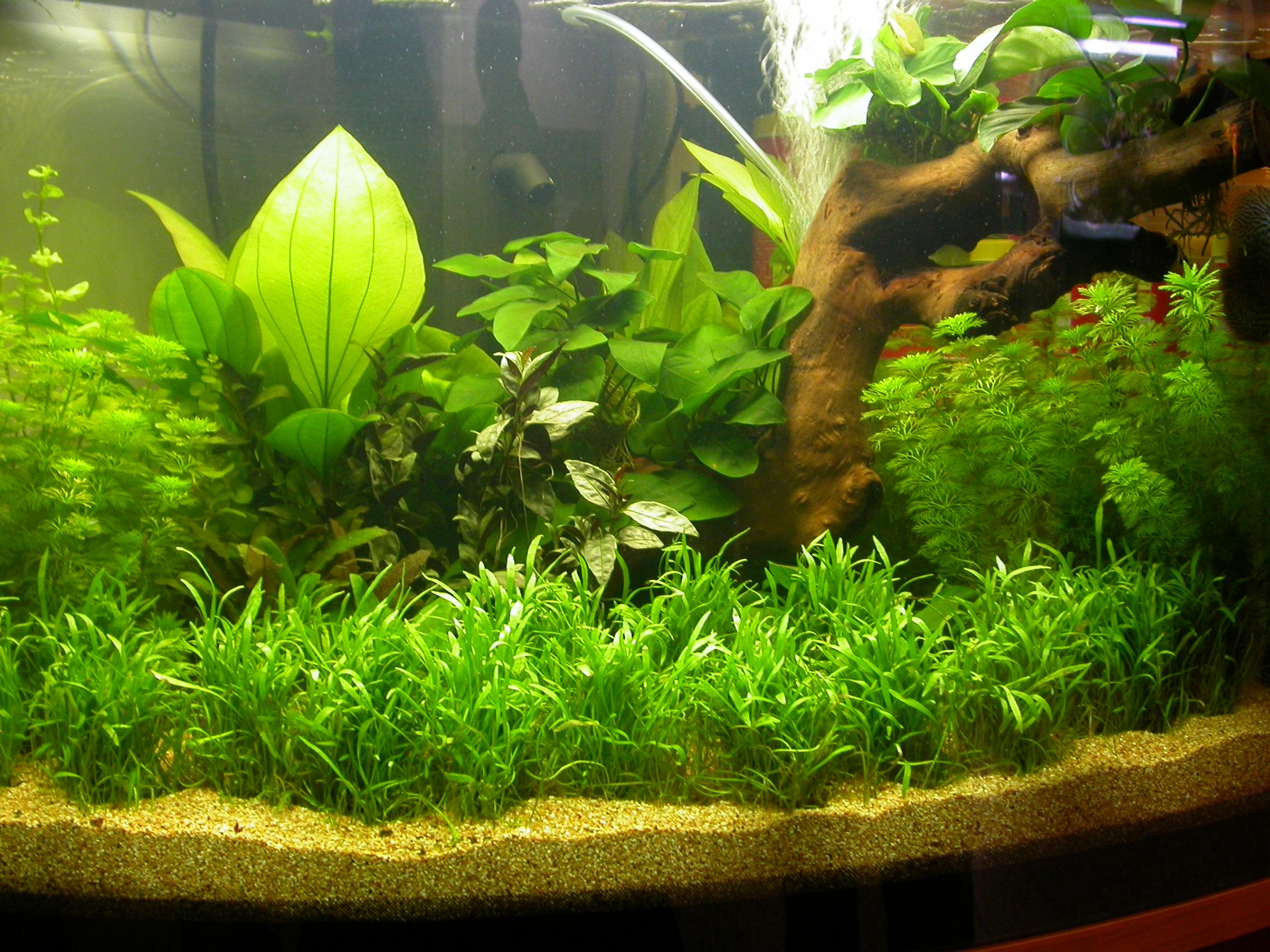 Club acquariologico erpetologico barese le piante in for Fondo per acquario